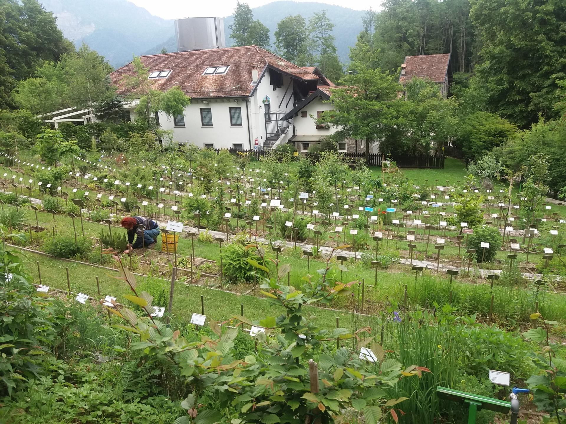 Orto botanico il giardino dei semplici dall'alto