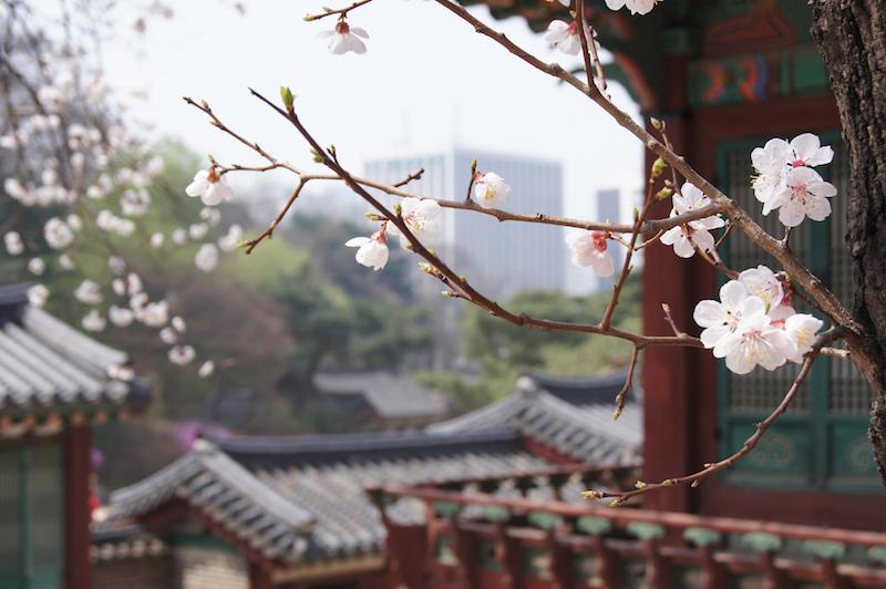 Changdeokgung è uno dei palazzi imperiali di Seoul assolutamente da vedere in città