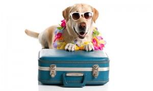 Vacanze con il cane: le regole base!