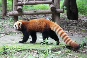 vacanze ad aprile Chengdu 1