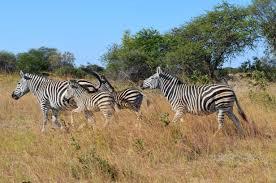 vacanze ad aprile Zimbabwe 1