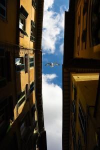 Borgo stretto e Borgo largo sono quartieri da visitare a Pisa