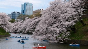 vacanze ad aprile tokyo 1