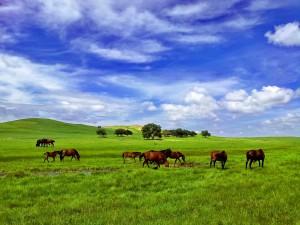 vacanze ad agosto - mongolia 2