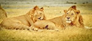 vacanze ad agosto - tanzania 3