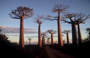 Madagascar1.vacanze a settembre