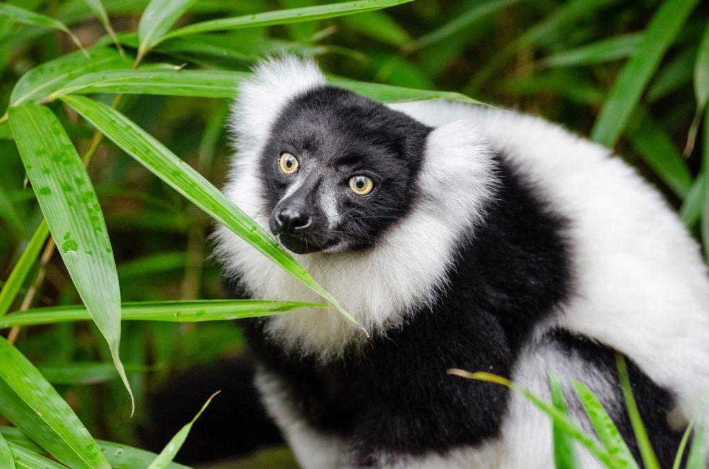 Madagascar3.vacanze a settembre