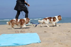 Vacanze Con Animali.1