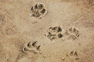 Vacanze Con Animali.4