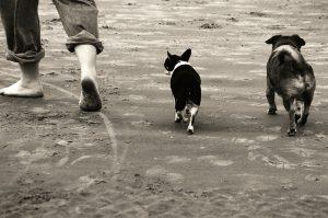 Vacanze Con Animali.6