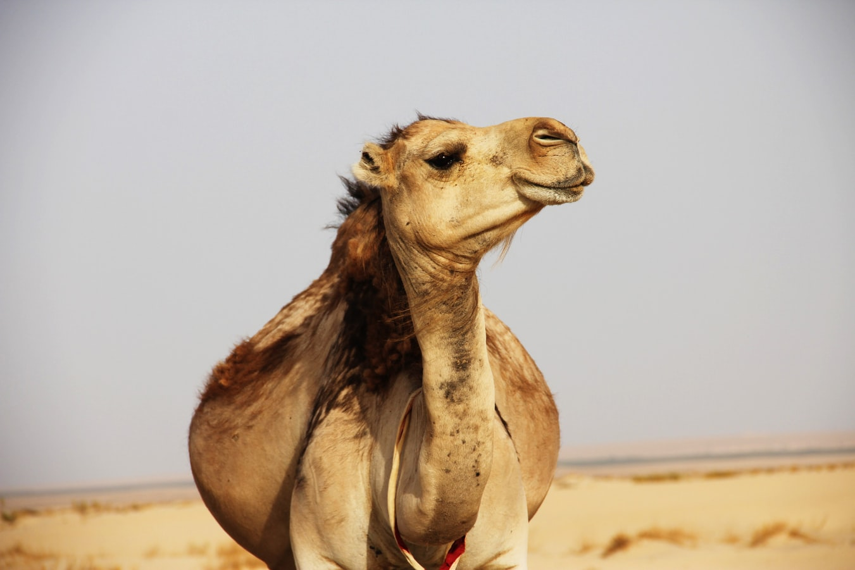 Dove andare in vacanza in Tunisia? Nel deserto ovviamente!