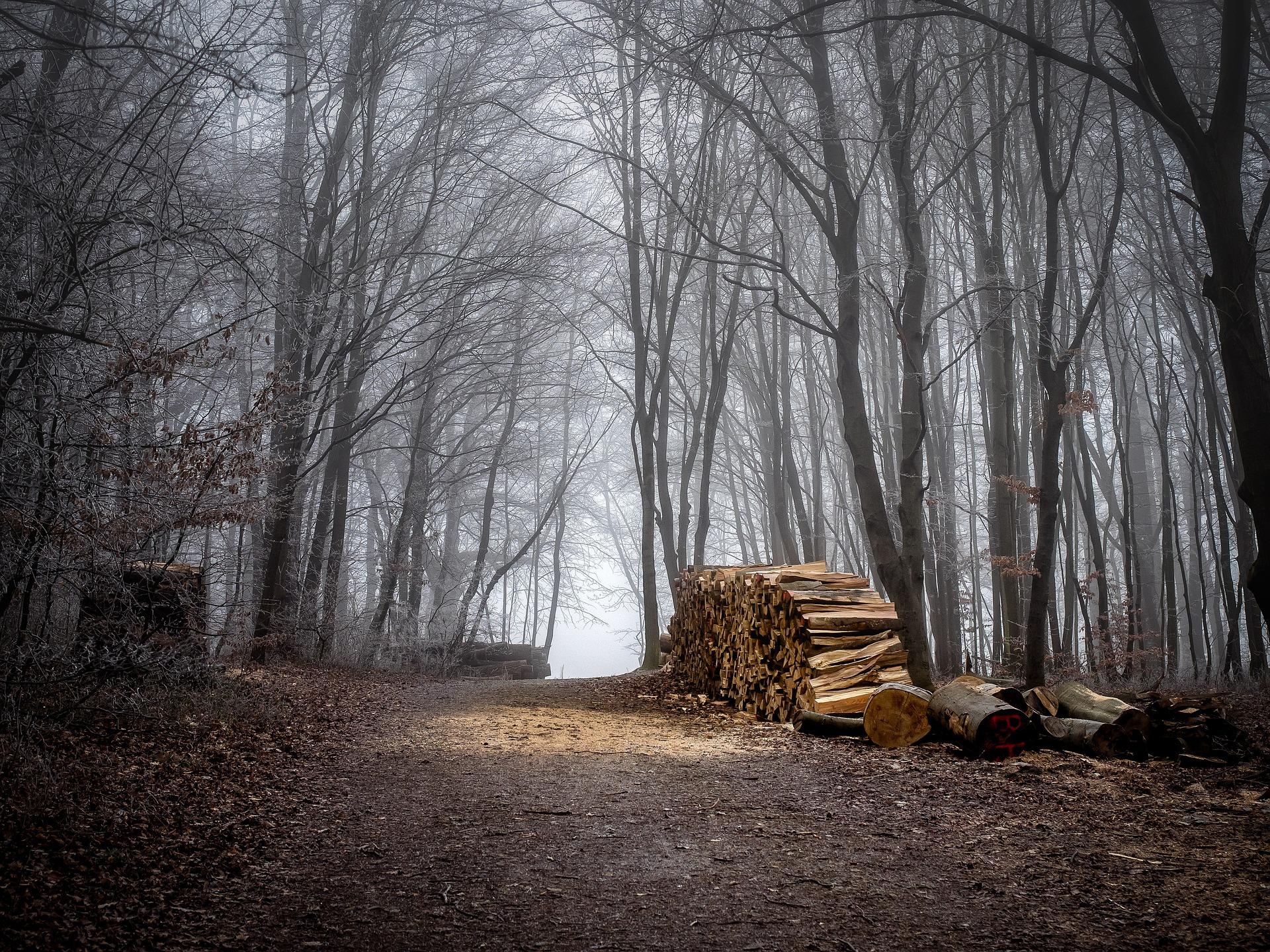 Scopri il Wienerwald durante una vacanza a Vienna e in Austria